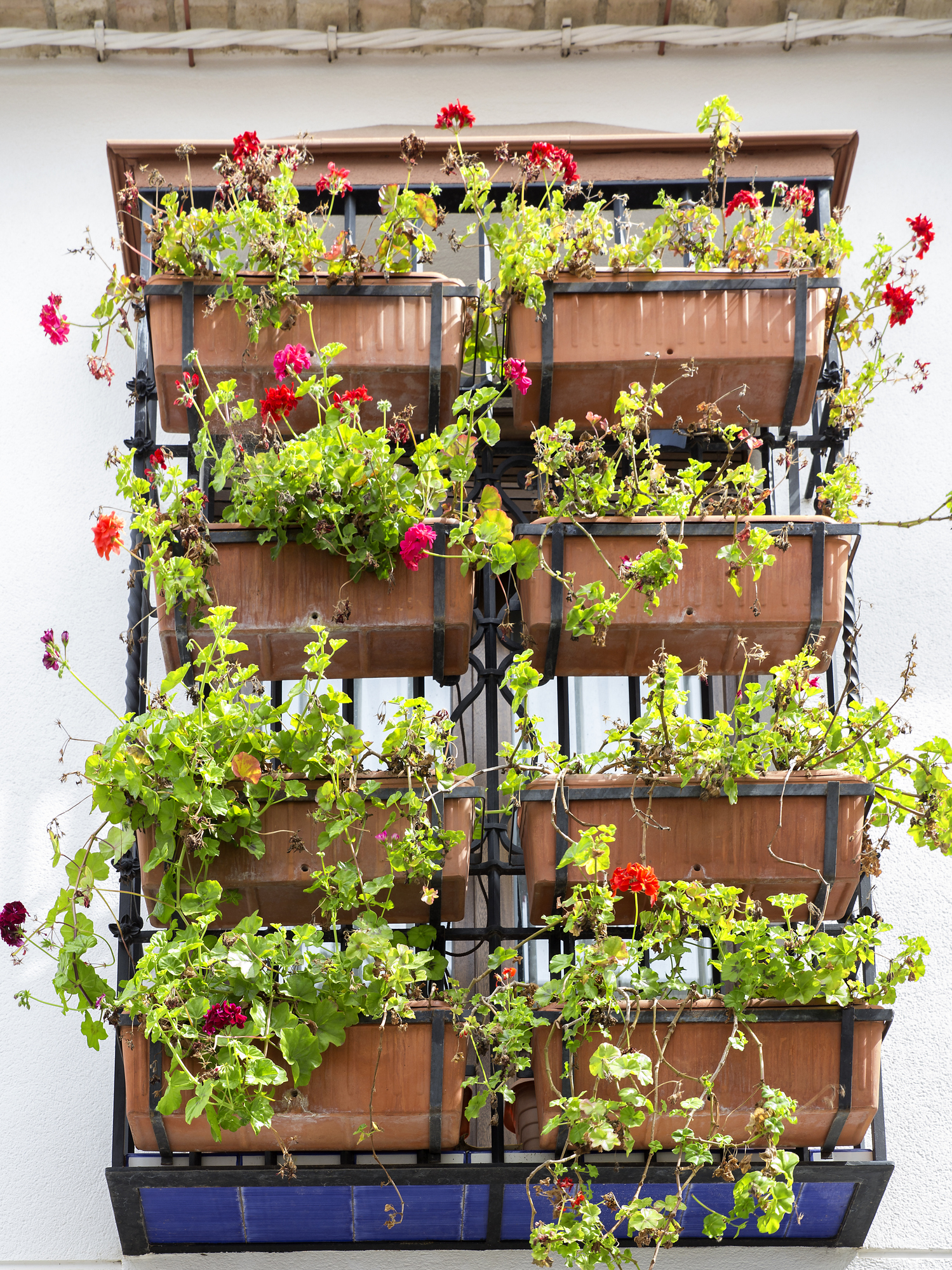 window decorated with red geranium pots on andalusian facade. Cordoba, Spain representing eco-friendly features